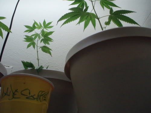 ai165.photobucket.com_albums_u53_tastymushroom_plantsdadecounty.jpg