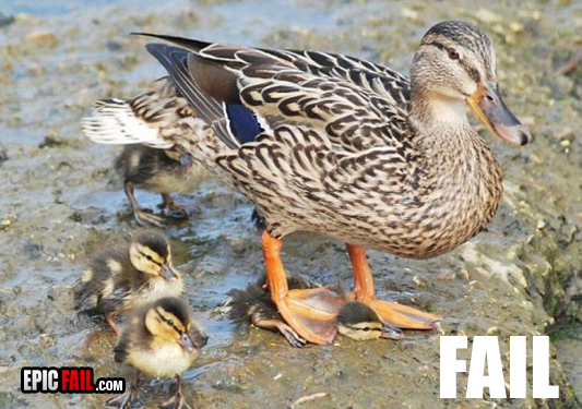 awww.epicfail.com_wp_content_uploads_2009_09_parenting_fail_duck.jpg