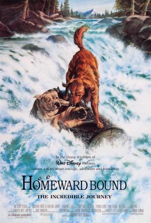 aupload.wikimedia.org_wikipedia_en_d_df_Homeward.bound_dvd_cover.jpg