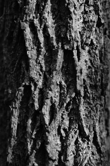 ai48.tinypic.com_2r597p5.jpg
