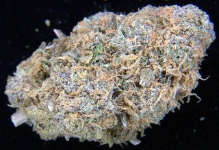 purpleurkeliwh4.jpg