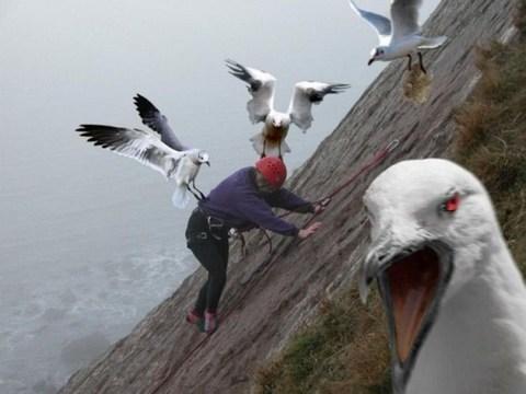 flockofseagulls.jpg