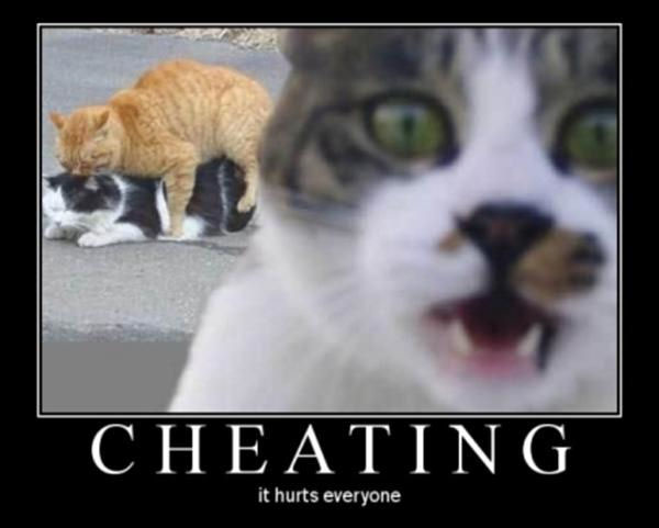 cheating_cats-13296.jpg