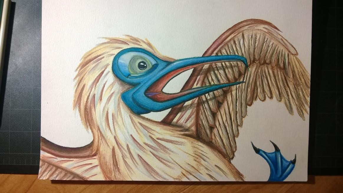 Blue Footed Booby FINITO
