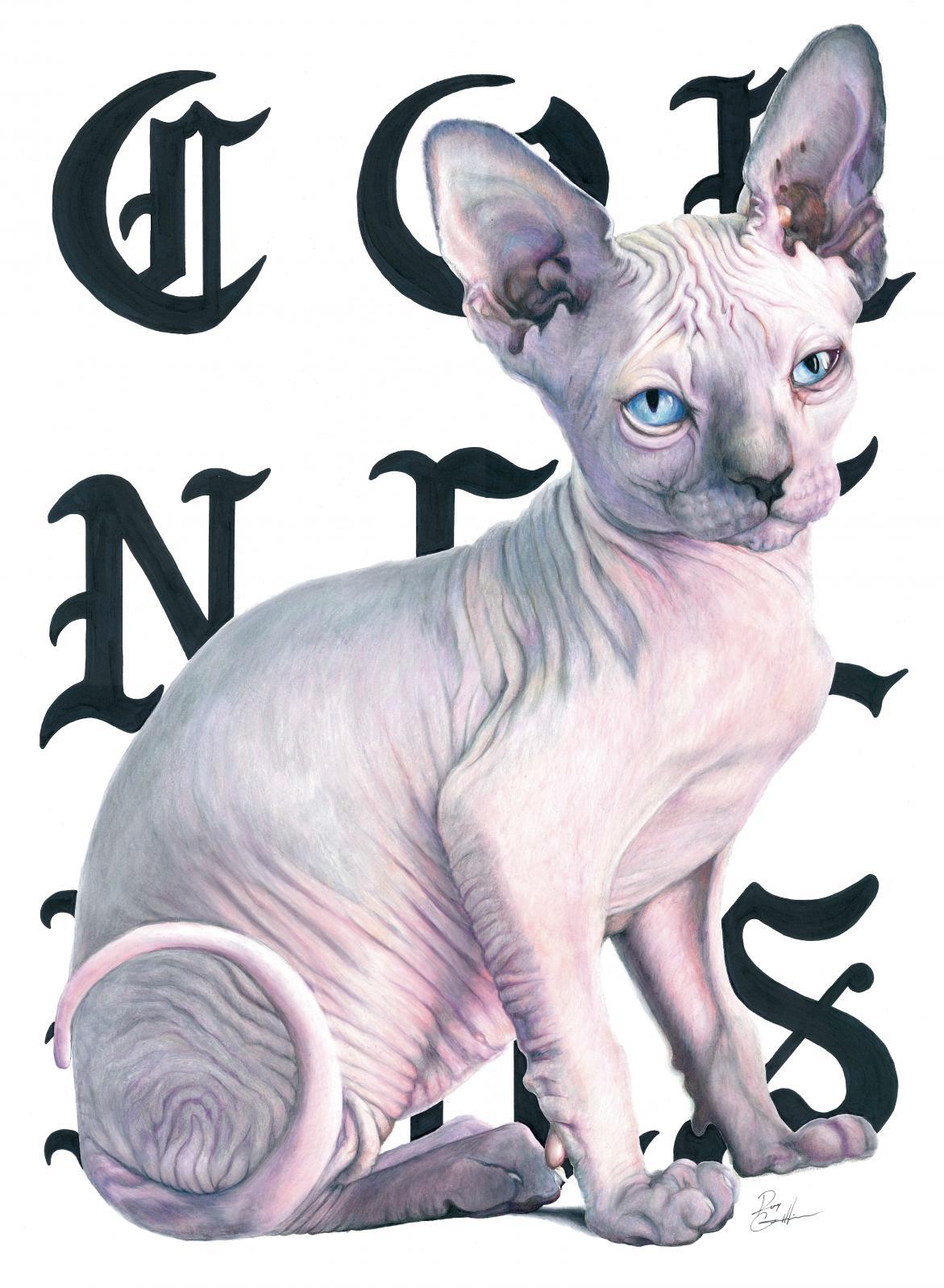 Cat Scan - print1-web.jpg
