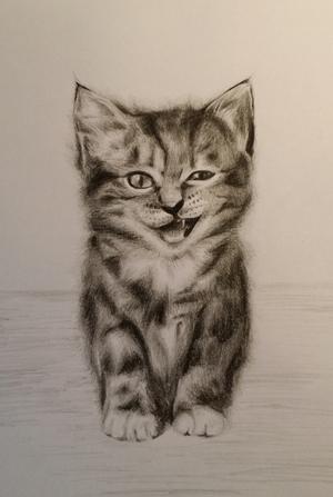 some weird cat I drew