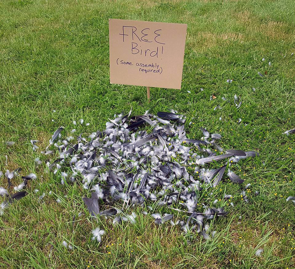 Free bird. Some assembly required.jpg