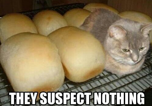 Kitty-Cat-Makes-The-Best-Camouflage-Ever-Funny-Cute-Picture~01~01.jpg