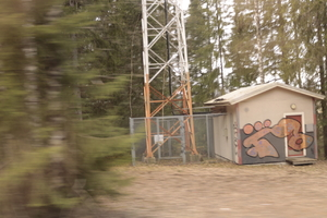 a forest, an adaptor and a graffiti